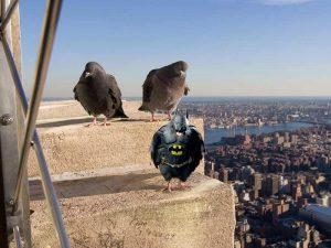 Arne_Borgan_Lovebirds_Batman_Malmo